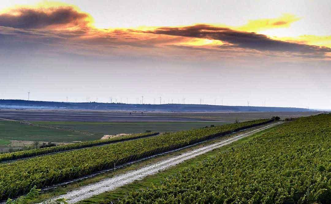 Wolkenberg: Erstaunliche Weine aus der Lausitz
