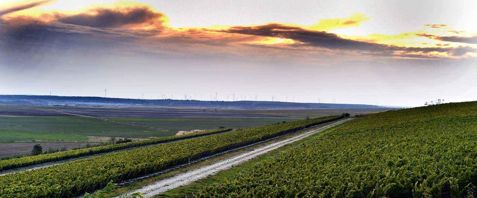 TEAMBRENNER Weintipp Weinbau im Tagebau Wolkenberg Panorama